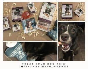 Treat your dog this Christmas with some Webbox treats