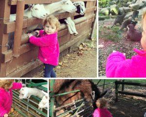 Hoo Farm animal experience