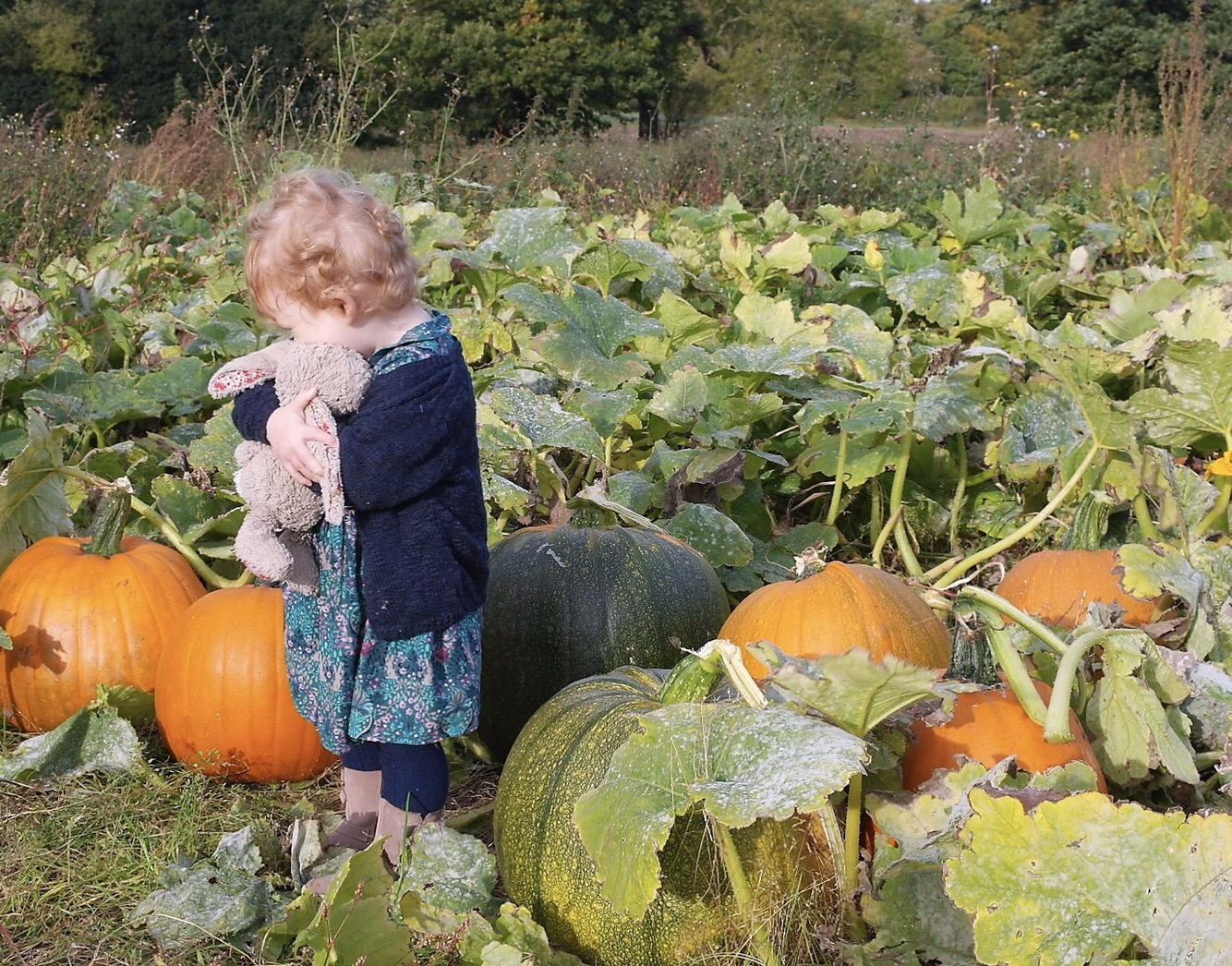 Pumpkin fields and snuggles with bunny
