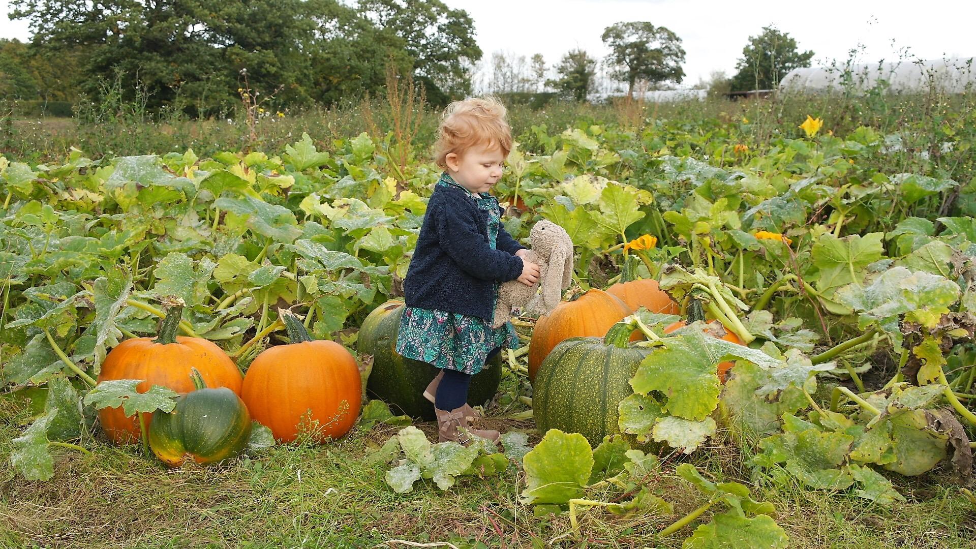 Having fun at the pumpkin field