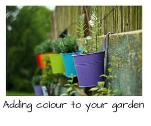 Its easier than you think to add a little colour to your garden during the winter months