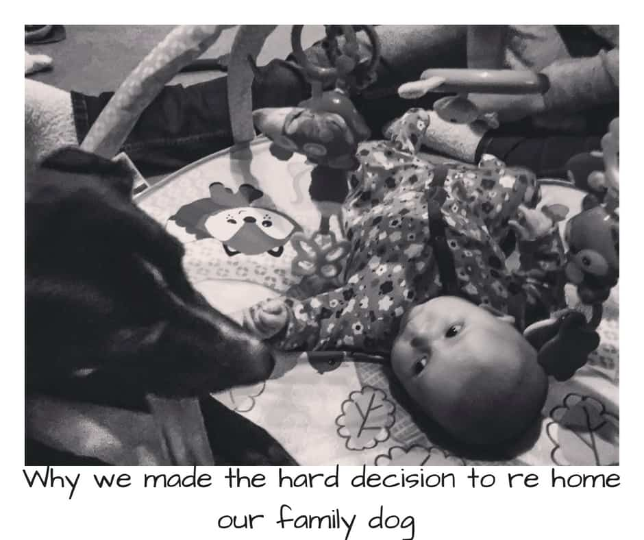 Why we made the hard decision to re homne our family dog Kya