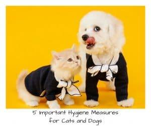 5 Important Hygiene Measures for Cats and Dogs