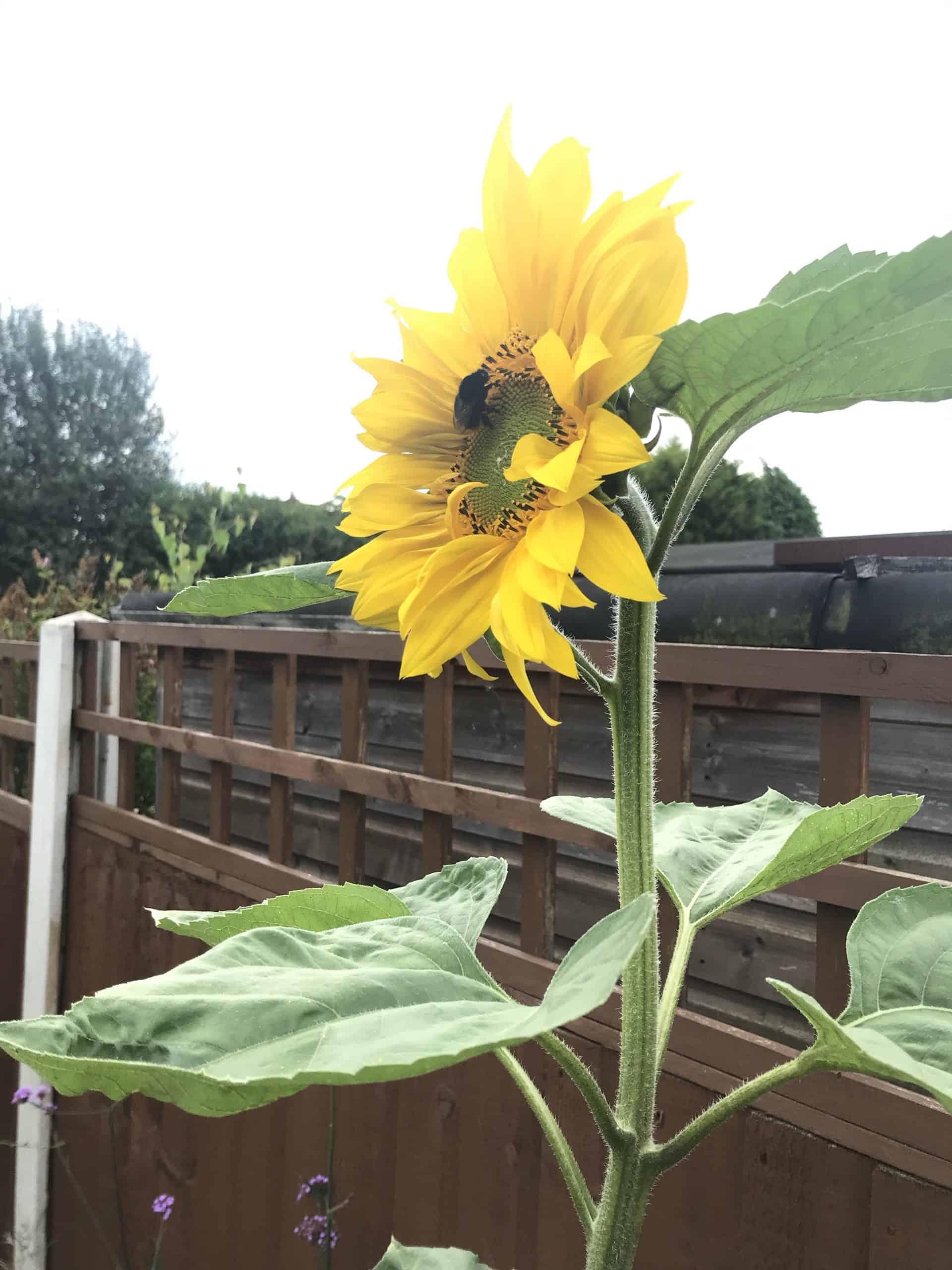 Getting the garden summer ready